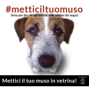 #METTICILTUOMUSO – PETIZIONE CONTRO L'ESPOSIZIONE DEGLI ANIMALI NELLE VETRINE DEI NEGOZI