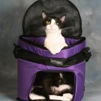 Gatto trasportino