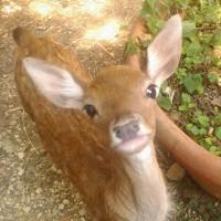 Conoscere gli animali selvatici