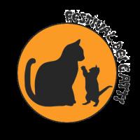 logo festival gatti 4