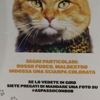 #aspassoconbob