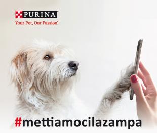 #mettiamocilazampa: la petizione firmata dagli amici a 4 zampe per una società più pet-friendly