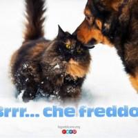 I Dieci Consigli Invernali per migliorare la vita del tuo Animale, e non solo il tuo