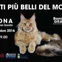 I Gatti piu' Belli del Mondo a Verona