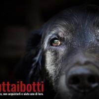 #buttaibotti