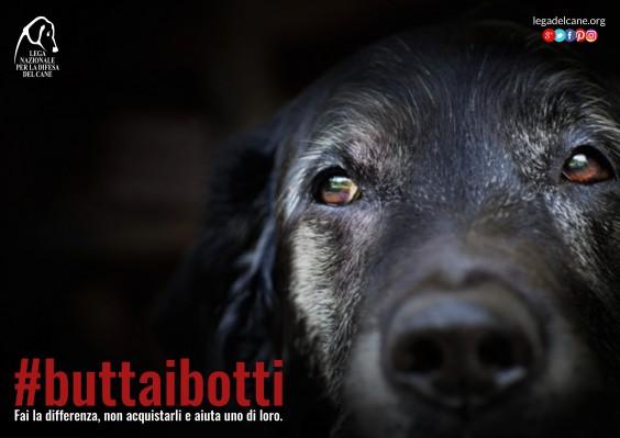 buttaibotti-2016-cane-564x399