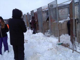 Animali Vittime del Gelo al Sud