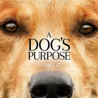 Qua' La Zampa/A Dog's Purpose