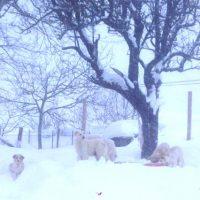EMERGENZA CENTRO ITALIA – LNDC SEMPRE SUL CAMPO PER SALVARE GLI ANIMALI