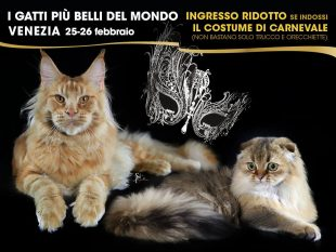 I Gatti piu belli del mondo a VENEZIA