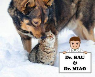Dottor Bau & Dottor Miao, arriva la mutua per i nostri migliori amici