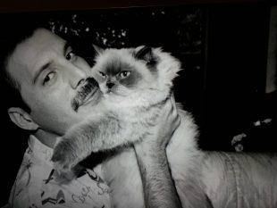 Freddie Mercury, amor di gatto