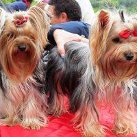 A Monferrato Dog Show, vince l'amicizia ed il sole