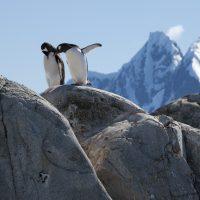 25 Aprile – Giornata del Pinguino – Incontrali a ZOOM Torino