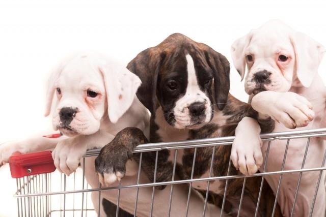 OIPA informa; Brexit ed Animali Domestici