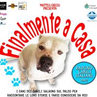 FINALMENTE A CASA!!! A Senigallia due giorni per dare casa ai cani dei rifugi