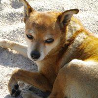 Stanno per cambiare le norme per il controllo e la tutela della popolazione canina in l'Emilia Romagna