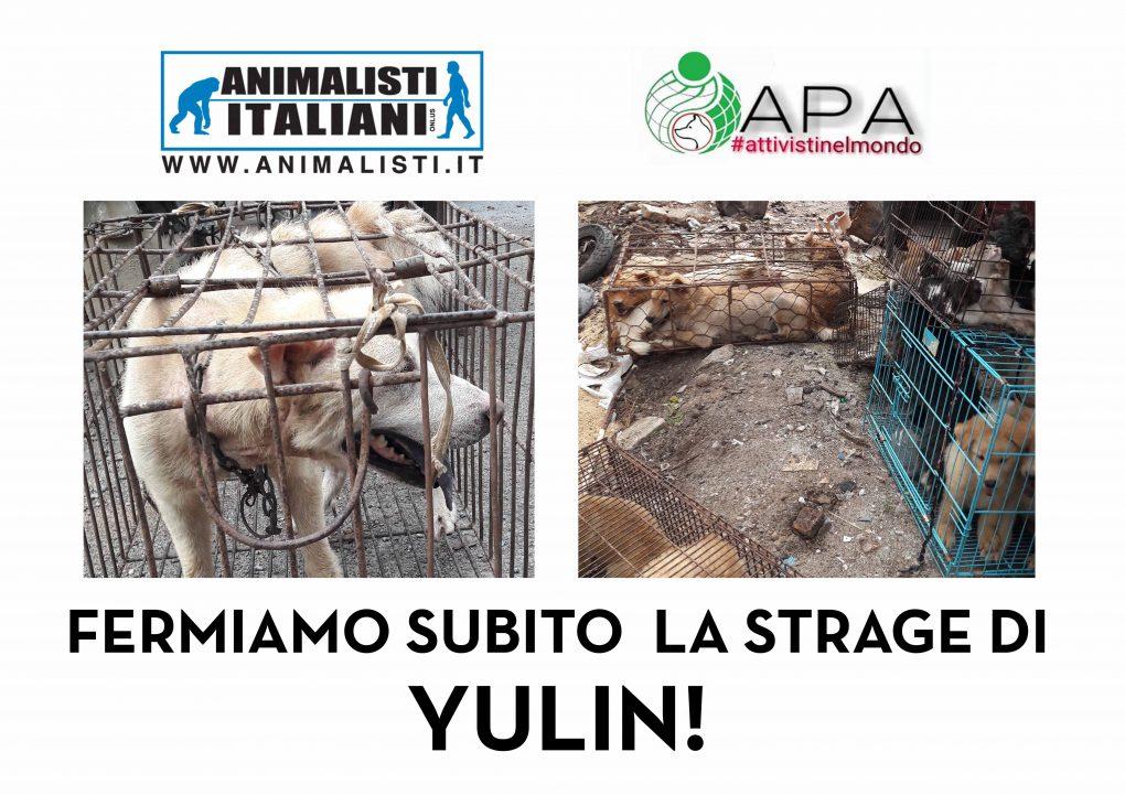 FERMIAMO IL FESTIVAL DI YULIN!!!!