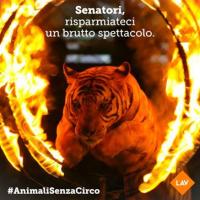 #ANIMALISENZACIRCO