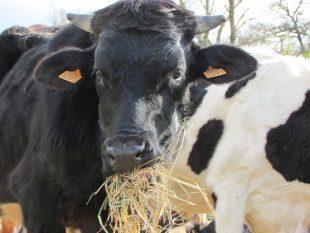 AGRIPUNK : il rifugio per animali ha bisogno di AIUTO!