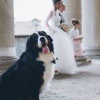 Matrimonio con lui. IL MIO CANE!!!