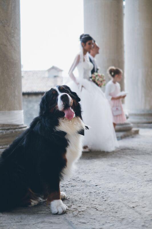 Matrimonio Uomo Cane : Matrimonio con lui il mio cane radiobau