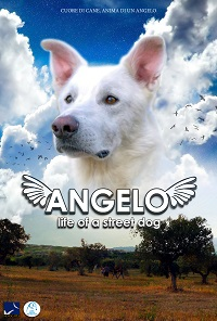 """Angelo – life of a street dog"""