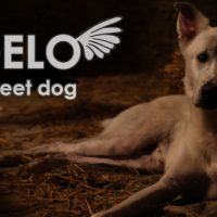 Angelo – Life of a Street Dog – Pod Cast con  Andrea Dalfino regista del Docu/film