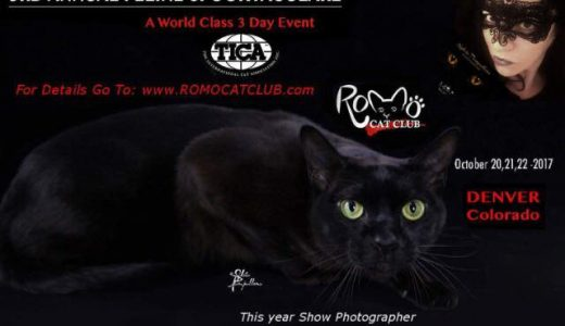 Radio Bau & Co. 4 The Romo Cat club in Denver, Oct 2017!