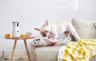 FURBO: Se ti sei mai chiesto cosa fa il tuo cane quando è in casa da solo?