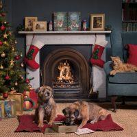Lily's Kitchen porta la magia del Natale nelle ciotole dei quattrozampe