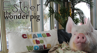 ESTHER THE WONDER PIG HA BISOGNO DI TUTTI NOI!!!