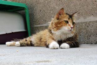 I benefici della relazione tra gatti e umani – Nuovo Progetto al Parco Gattile di Milano