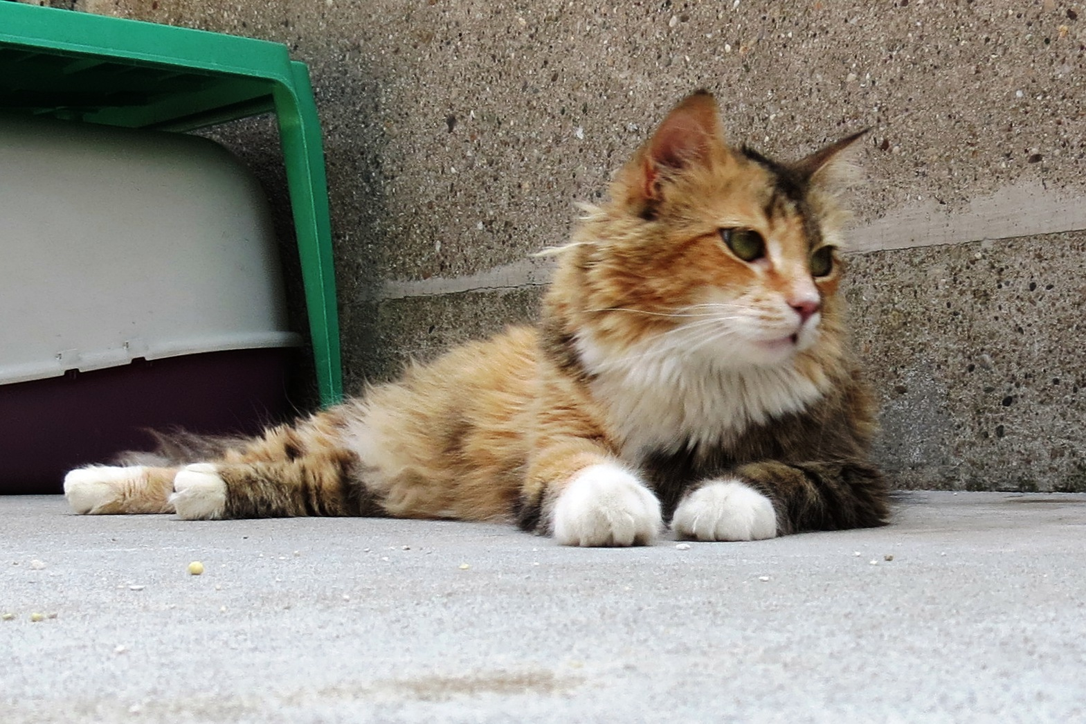 I Benefici Della Relazione Tra Gatti E Umani Nuovo Progetto Al