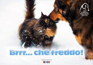 10 Regole per aiutare i nostri amici animali con il Freddo!