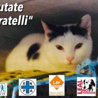 ROMA: SERIAL KILLER DEI GATTI A PIEDI LIBERO