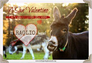 A San Valentino aiuta IL RIFUGIO DEGLI ASINELLI