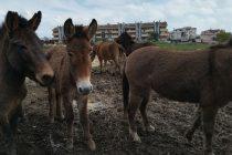 60 Equini Sequestrati a Lunghezza (Roma)