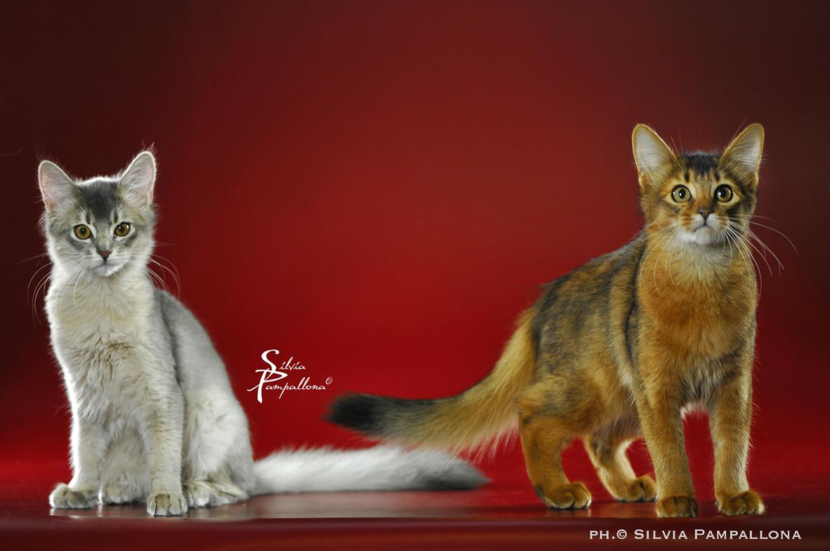 A Padova,  'I gatti più belli del mondo'