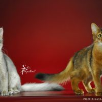 I gatti più belli a Venezia