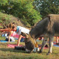 Yoga al Rifugio degli Asinelli