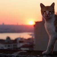 KEDI, la citta' dei gatti