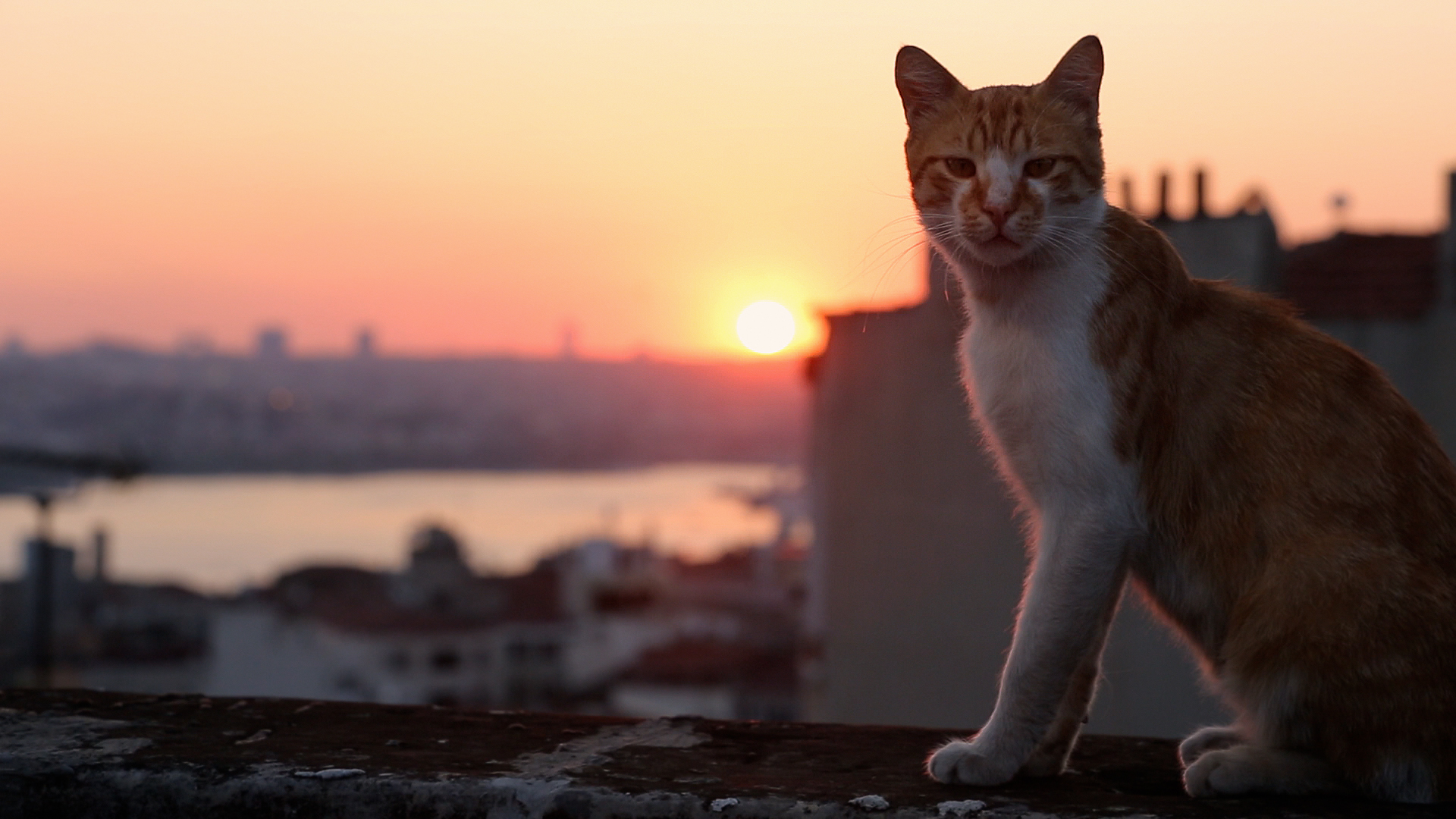 17 Febbraio - Giornata Nazionale del Gatto