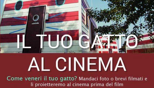 IL TUO GATTO AL CINEMA!
