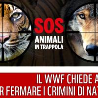 WWF: fermiamo i crimini alla Natura