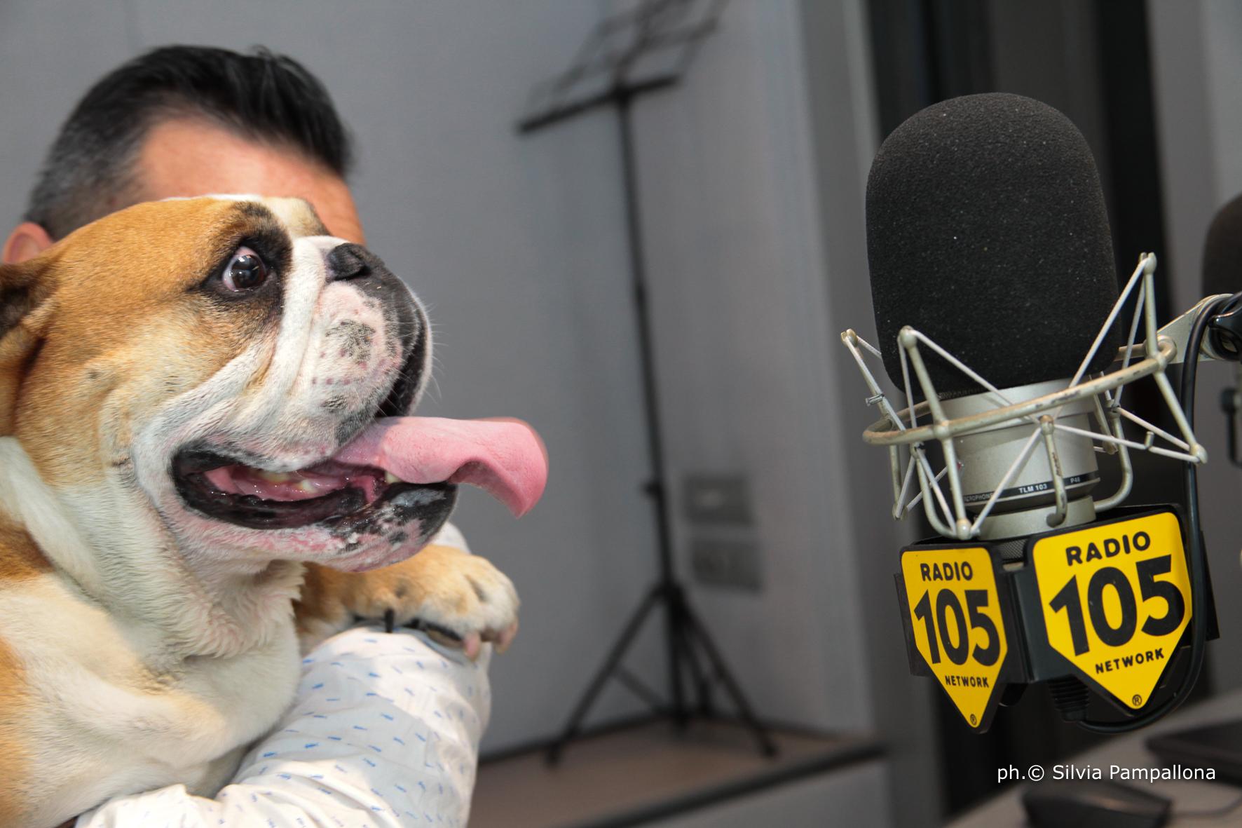 Il 22 Giugno 2018 Giornata Mondiale del Cane in Ufficio