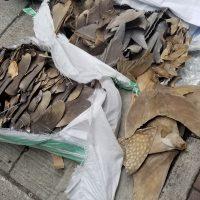 Spedizioni Illegali di Pinne di Squalo, smascherate da Sea Shepherd Hong Kong
