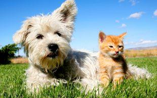 """l'Italia è uno dei Paesi più """"pet friendly"""", secondo il Nuovo Rapporto Assalco"""