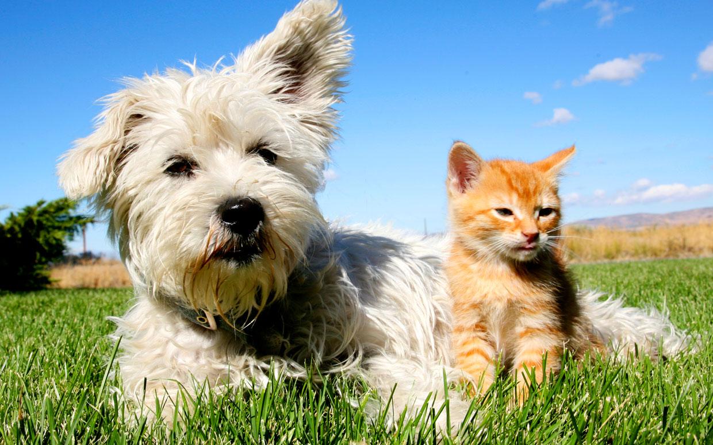 Litalia è Uno Dei Paesi Più Pet Friendly Secondo Il Nuovo