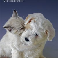 Cane & Gatto : Due stili a confronto…